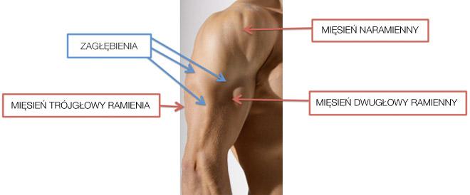 Modelowanie ramion