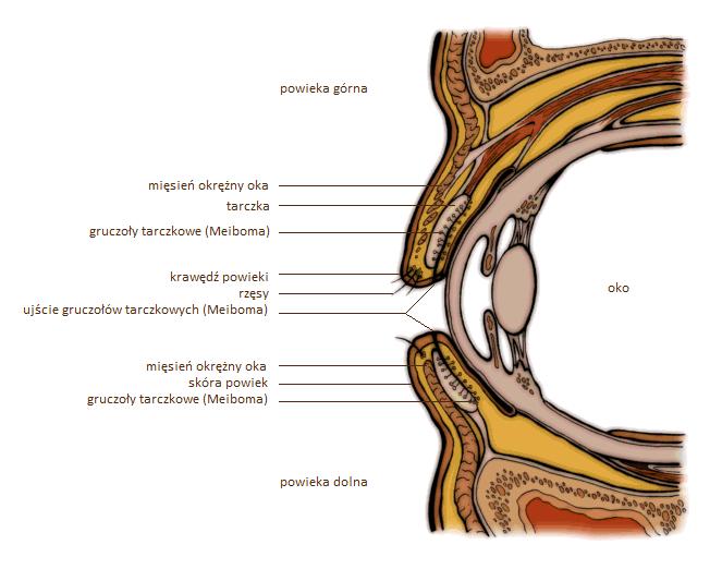 Chirurgiczna rekonstrukcja powiek